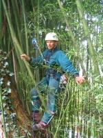 a sűrű bambusz se akadály a fa megmászásában