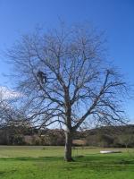 fa korona alakítás, kicsinyítés