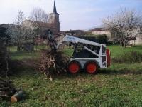 hársfa sor visszaifjítása és deponálása