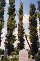 rádőlt szárazfa kivágása fokozott objektum védelemmel