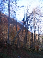 veszélyes rádőlt fa kivágása