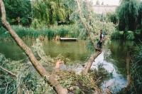 vihar által vízbe dőlt fa kivágása
