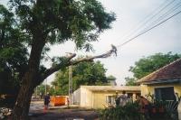 viharkár elhárítás vezetékre dőlt fa leszedése alpintechnikával