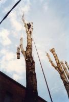 favágás alpintechnikával üvegház felett